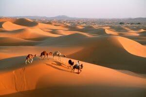 Desert Bivoauc Camel