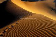 Desert Bivouac Sahara