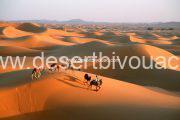 Desert Bivouac Camel