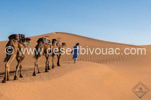 Desert Bivouac Ismail and Dromedaire