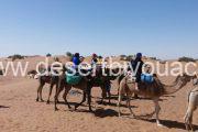 Cameltrekking Desert Bivouac Mhamid