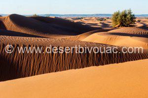 Desert Bivouac Erg Mezouariaa