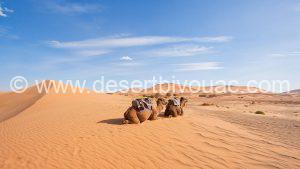 New Year 3 Day Tour Morocco